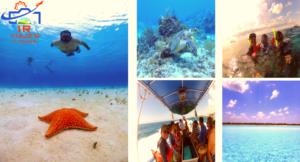 El Cielo Cozumel Snorkel Tour