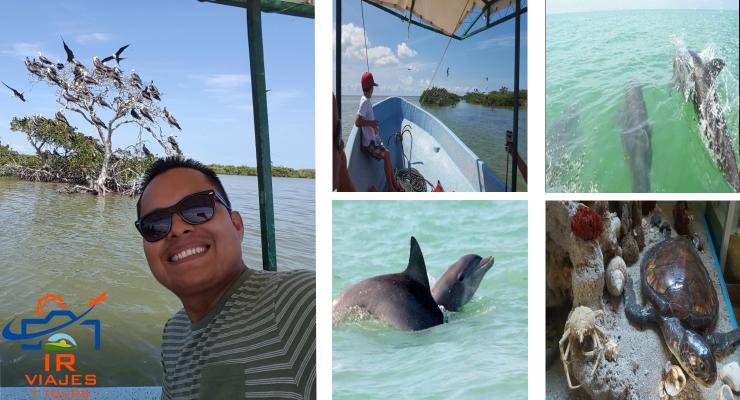 Tour Campeche Isla Aguada encuentro con Delfines