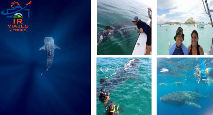 Tour nado con Tiburones Ballena desde Cancun