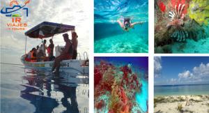 Tour Cozumel 3 Sitios De Snorkel Mas Playa Virgen